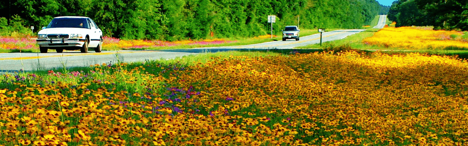 Roadside_flowers_960x300